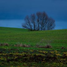 <p>Farm fields in subdued light early on a Christmas morning.</p>