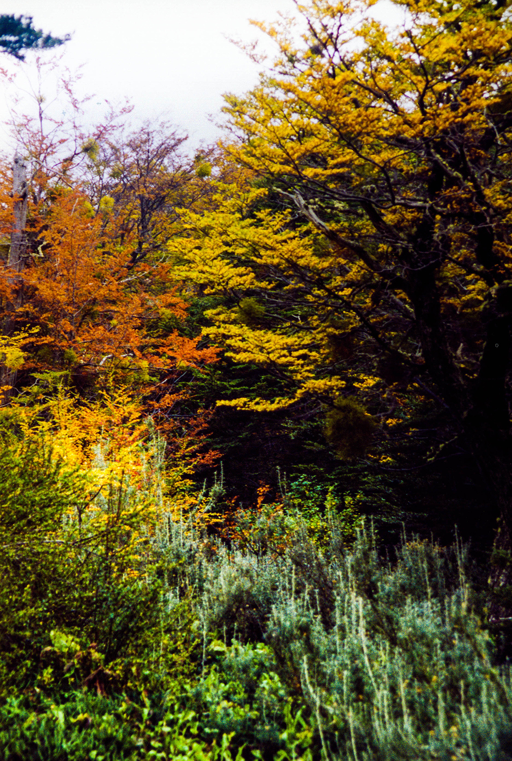 <p>An explosion of colour in the autumn leaves.</p>