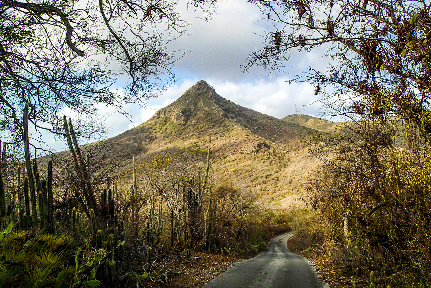 <p>A view en route to Christoffelberg, Curaçao's highest peak. While only 371 metres high, it is still something of a strenuous climb in the Caribbean heat.</p>