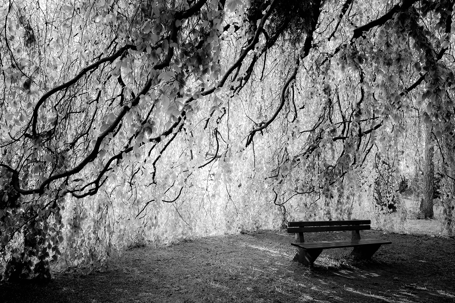 <p>Low-hanging branches and leaves form a quiet chamber in the St.-Elisabeth-Kirchhof, a cemetery in Berlin. </p>