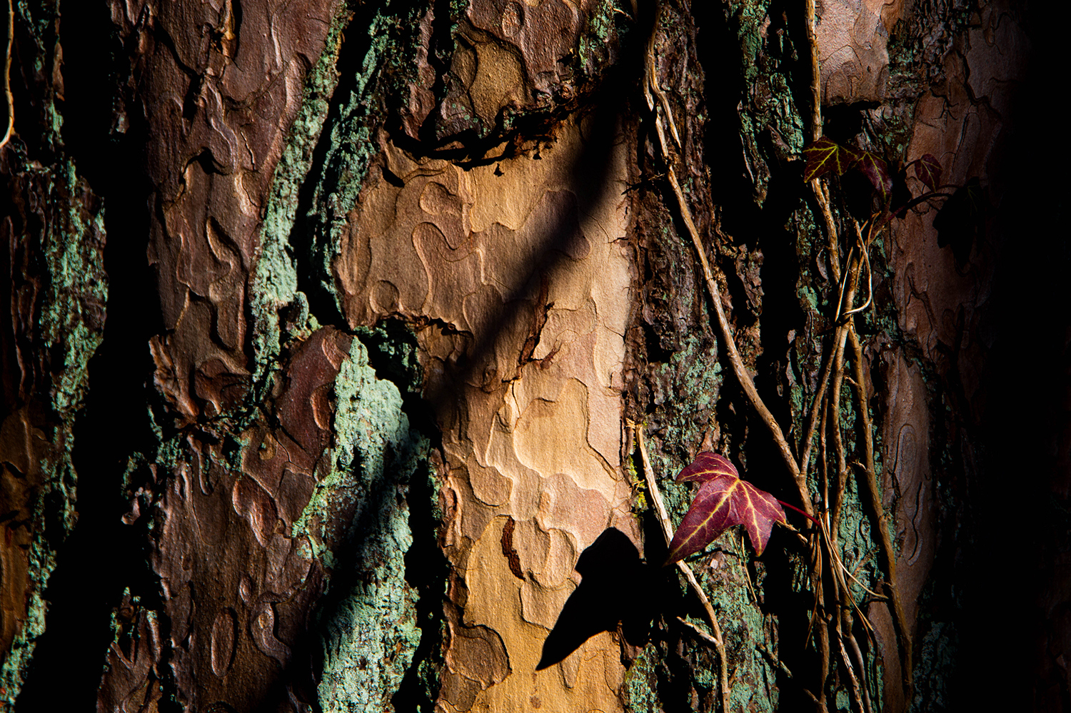 <p>Small details in woodlands near Buckow, Germany.</p>