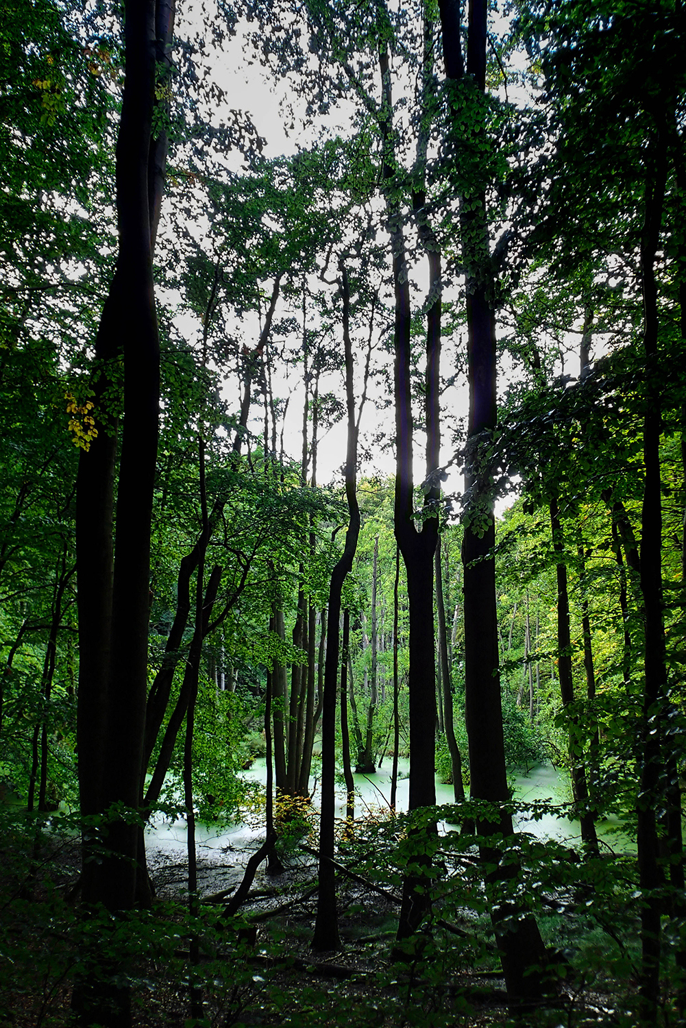 <p>A walk in a forest reveals a sort of swamp amid the trees. <br /></p>