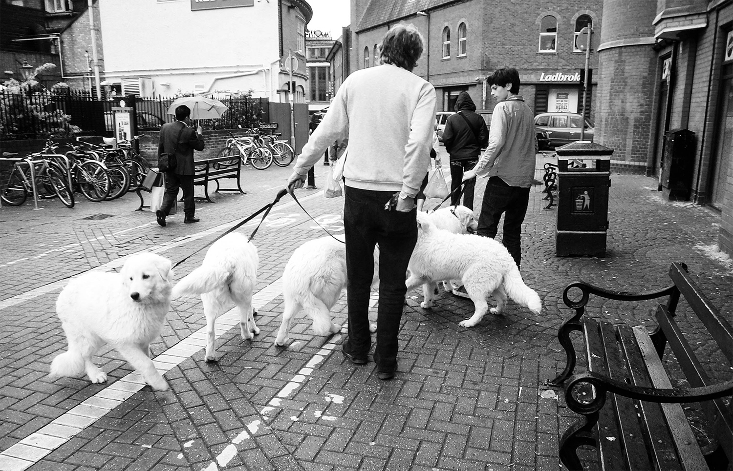 <p>A family slightly outnumbered by their contingent of matching dogs.</p>