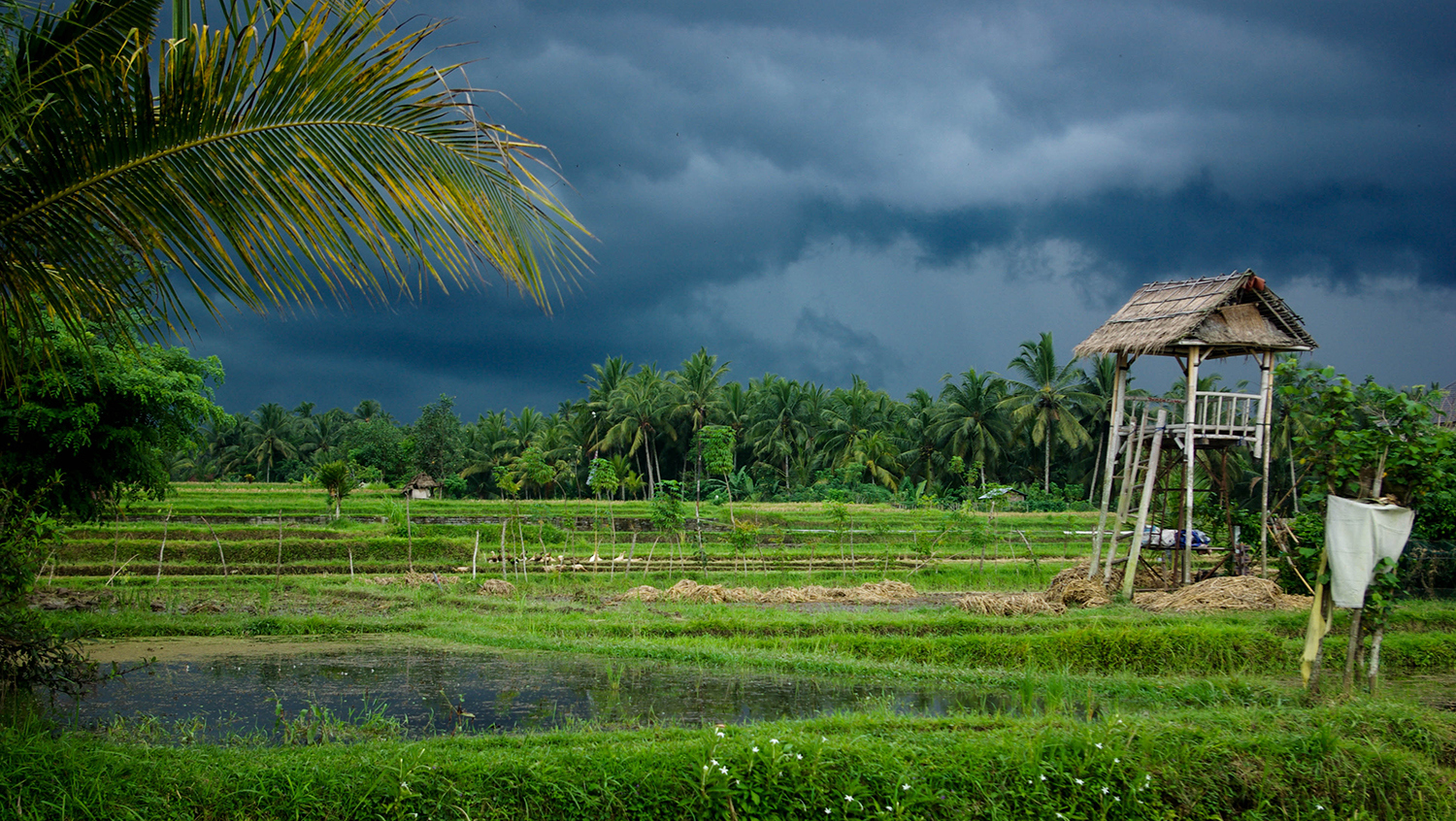 <p>A storm front moves in over rice paddies near Ubud, on Bali. </p>