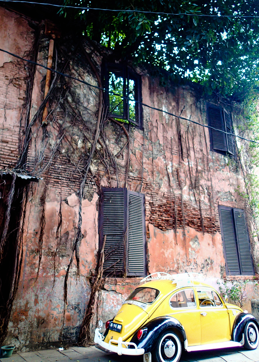 <p>Vines and a tree gradually reclaim a colonial era building in Jakarta's historic core.</p>
