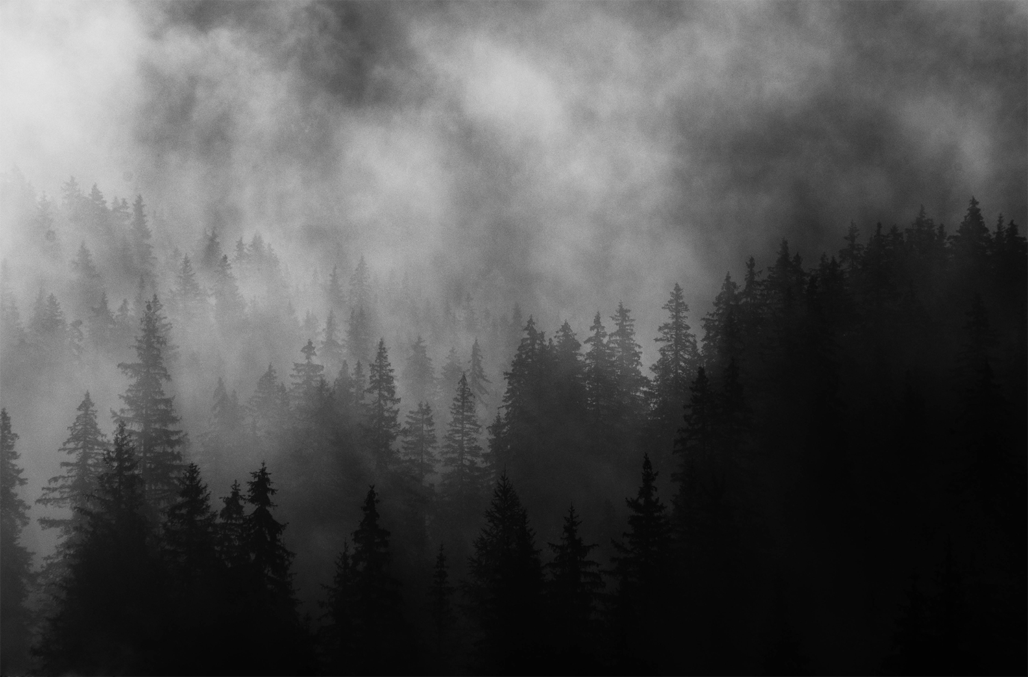 <p>Morning mist hangs in the trees of the Val di Funes.<br /></p>