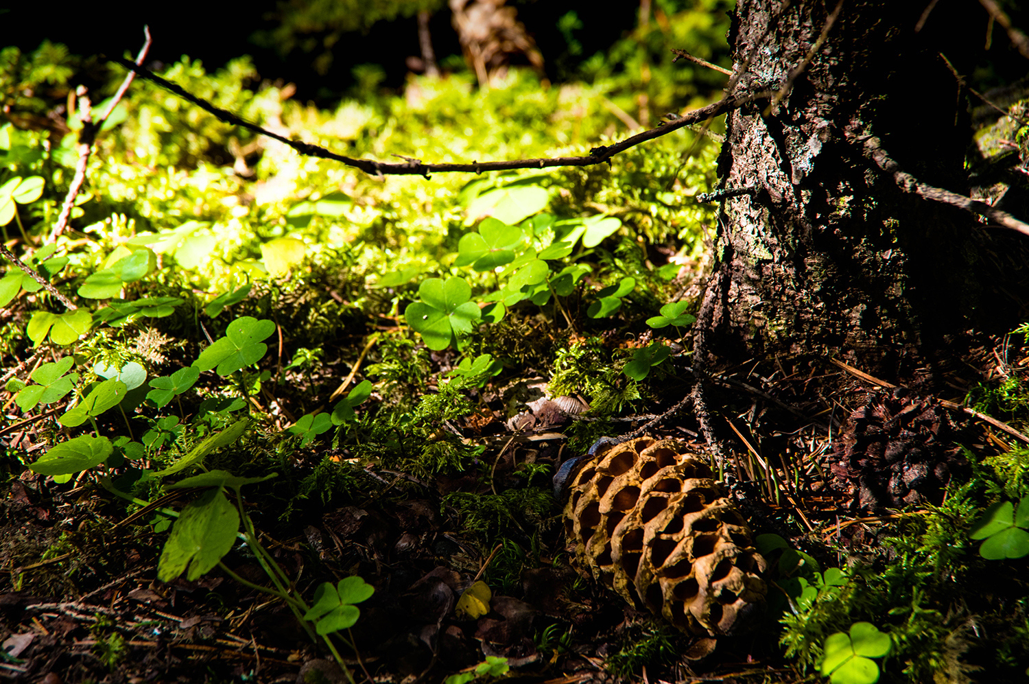<p>A miniature still-life scene found in a forest in the Dolomites.</p>
