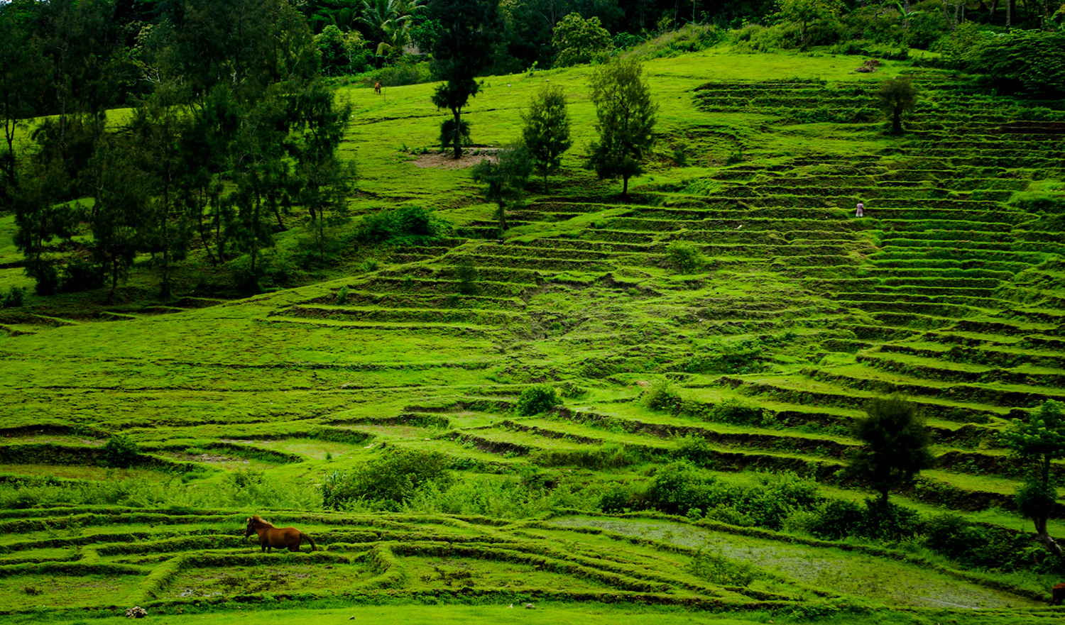 <p>A farmer tends to his terraced crops in central Timor-Leste's highlands. </p>
